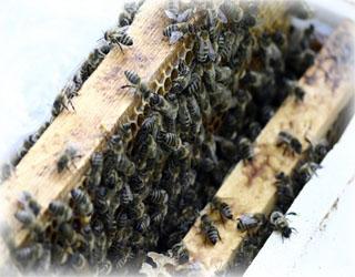 Včely ve včelím úle